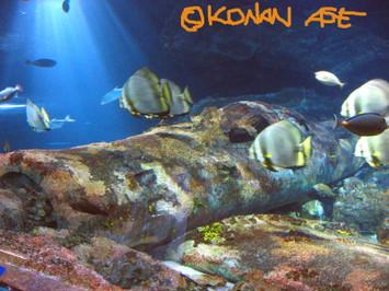 Aquarium_2_1