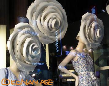 Rose_head