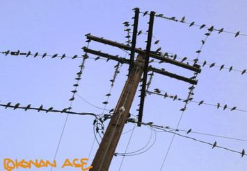 Wire_birds_1_1