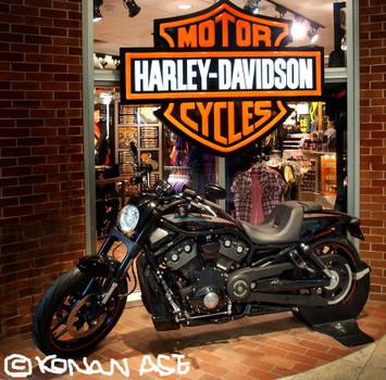 Harley_1_1