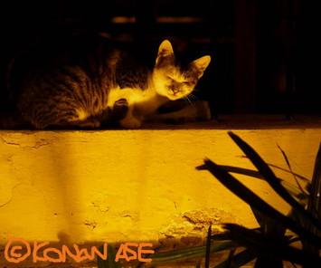 Sleeping_cat