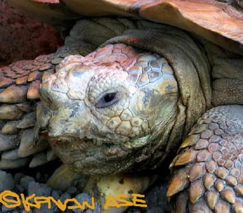 Tortoise_002_1