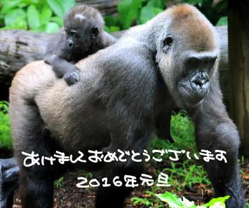Gorilla01_2_1