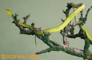 Snake_center_004