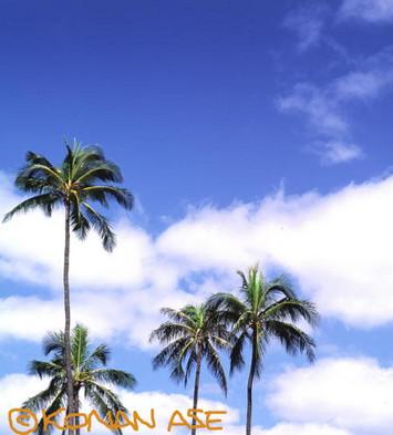 Hawaii_083_1_1