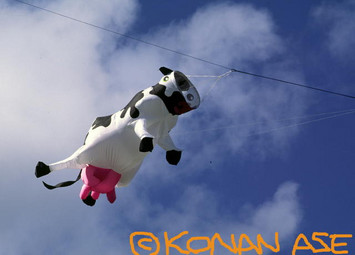 Windsock_cow_047_1