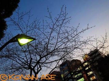 Ueno_park_28_1