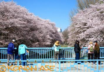 Sakura2018_002_1