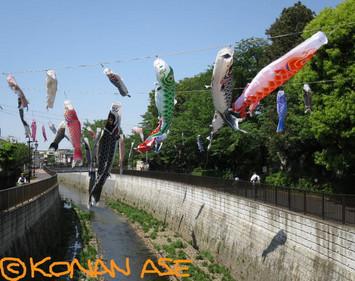Koinobori2018_001_1