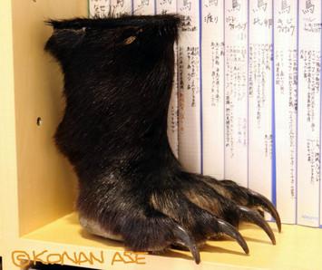 Bear_foot_16_1