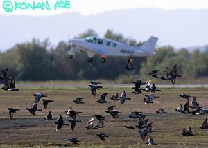 birdstrike01a