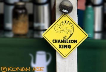 Chameleon_320_1