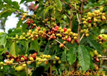 Coffee_256_1