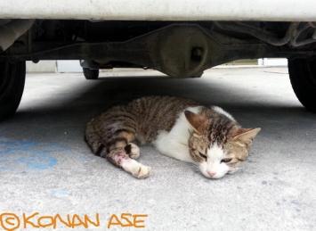 Yonaguni_cat_09_1