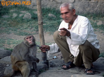 Monkey08
