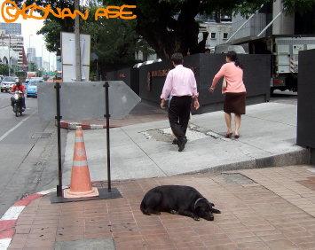 Dog08_2