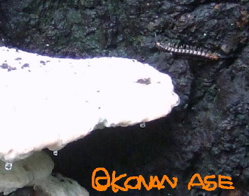 Kinoko_002
