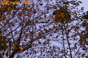 Birds_tree