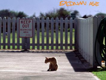 Oahu_cat_1