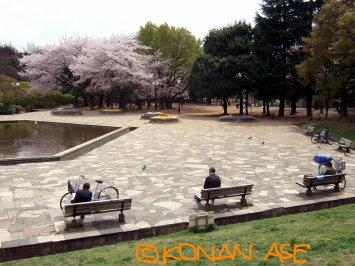 Sakura_mishuku