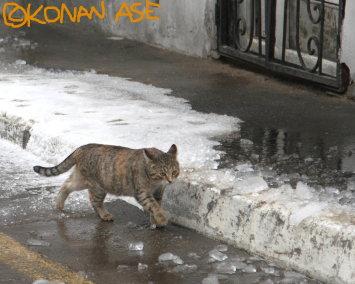 Moskva_cat