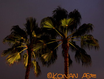 Palmtree_night
