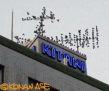 Antenna_birds_001