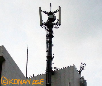 Antenna_birds_002