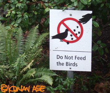 No_feed