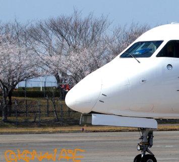 Sakura2012_1