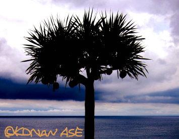 Okinawa_nambu