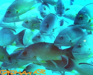 Small_fish_001