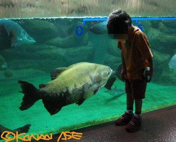 Small_fish_002