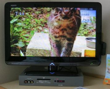 Busy_cat__002_2