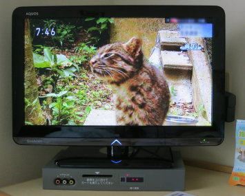 Busy_cat__003
