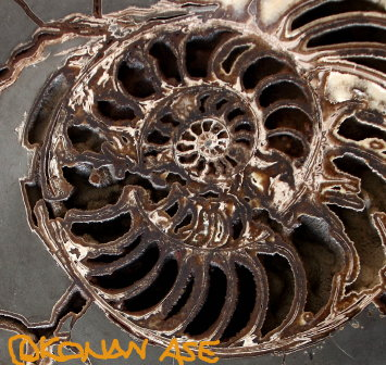 Spiral_001