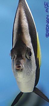 Fisheye02