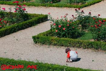 Rosegarden01