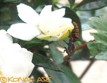 Ashinaga_1