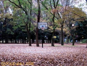Basketgoal_25_1