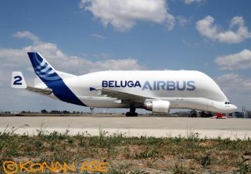 Beluga_004_1