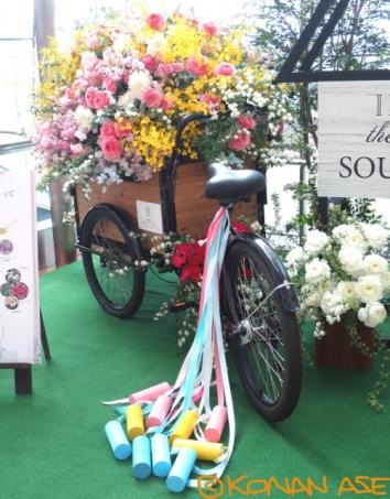 Bridal_flower_002_1_1