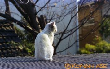 Cat_014_1