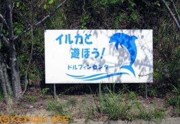 Dolphin_-center_700_1