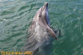 Dolphin_168