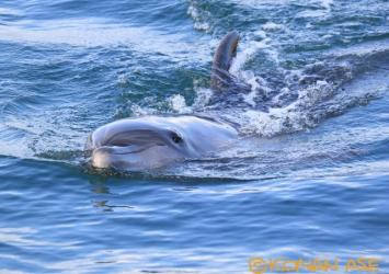 Dolphin_170