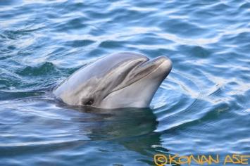 Dolphin_172
