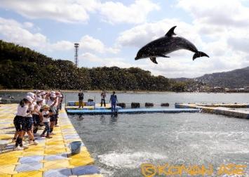 Dolphin_center_8_1
