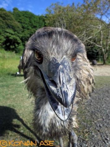 Emu_108_1