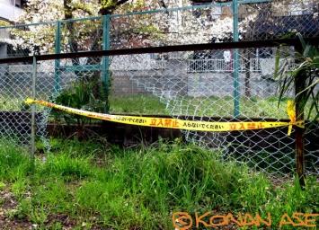 Fence_453_1_1